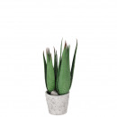 potted succulent plant, height 35cm, 26 sheets in